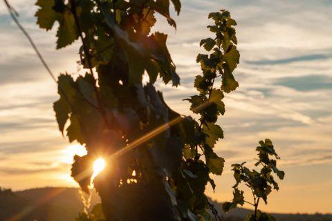 Sonnenuntergang Y-Burg Kernen Stetten