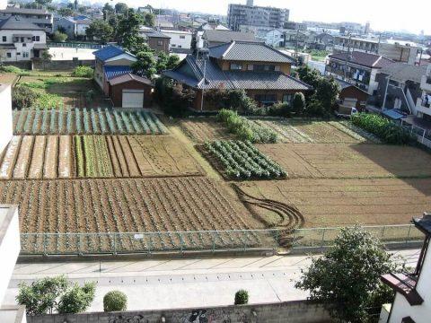 Felder in der Stadt