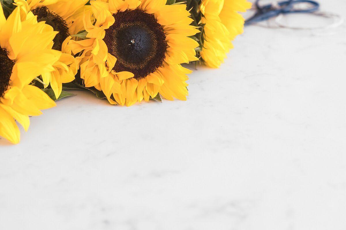 Blogging Sommerloch - Sonnenblumen