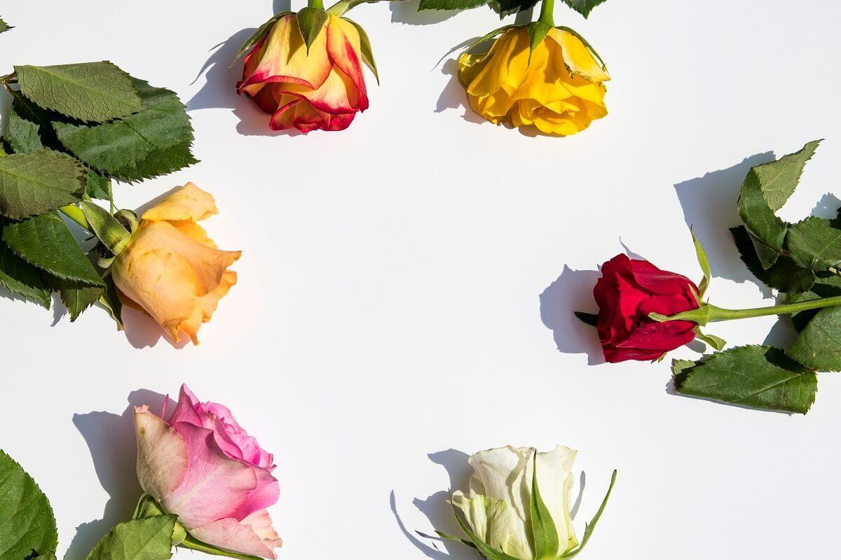 Blogging Sommerloch - Rosen