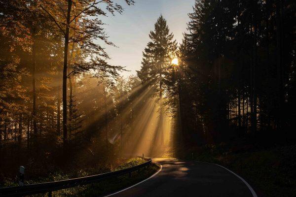 Fotografie von Sonnenstrahlen im Gegenlicht
