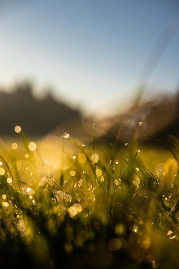 Morgentau auf Gras mit Bokeh
