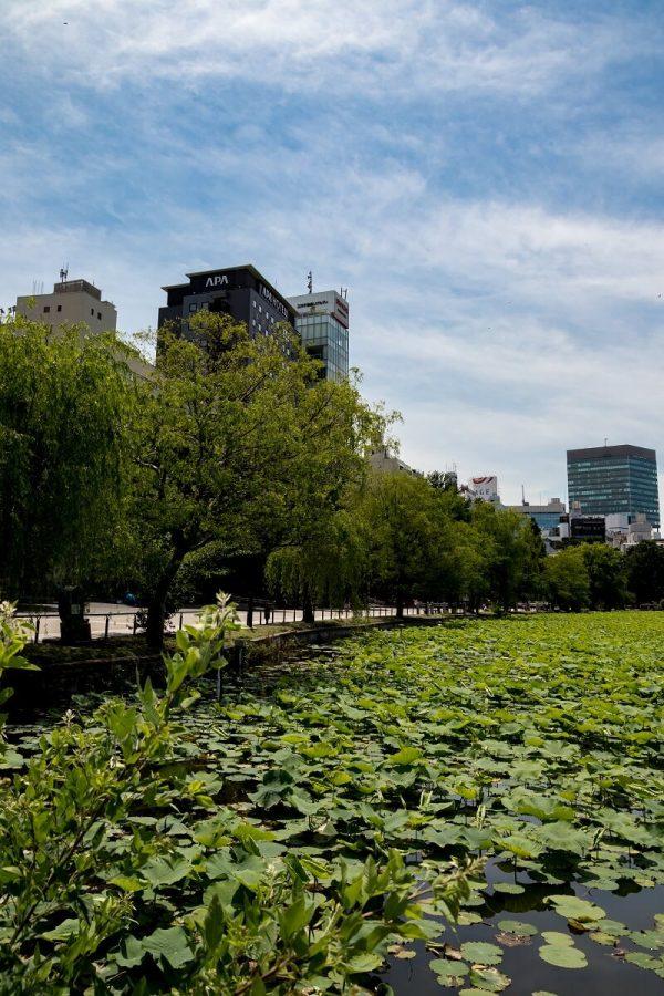 Shinobazuno-Teich, Ueno Park, Tokyo, Japan