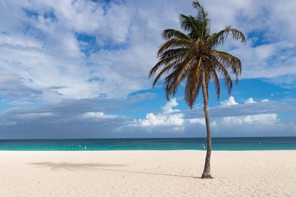 Palme am Eagle Beach Aruba