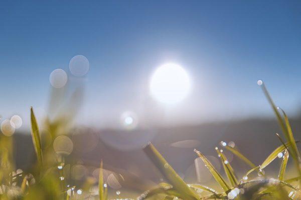 Fotos in Stockfotobörse verkaufen - Gras vor blauem Himmel mit Copyspace