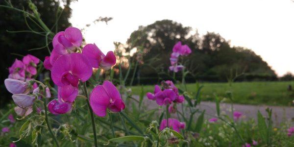 Blumen im Gegenlicht, fotografiert mit dem Handy - Fotografieren im Herbst