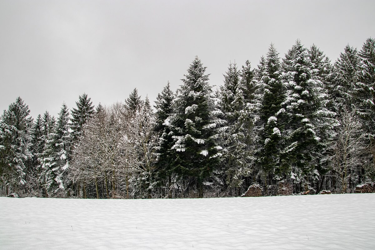 Bäume im Schnee Farbe