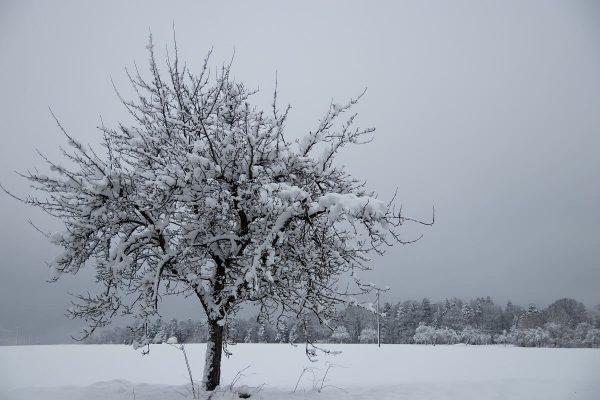 Tricks für's Fotografieren im Winter: Fotografieren bei Schnee