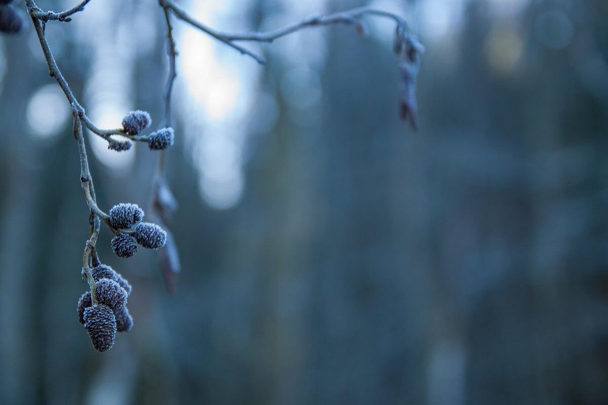 Tipps für's Fotografieren im Winter – Mehr als nur Eis und Schnee