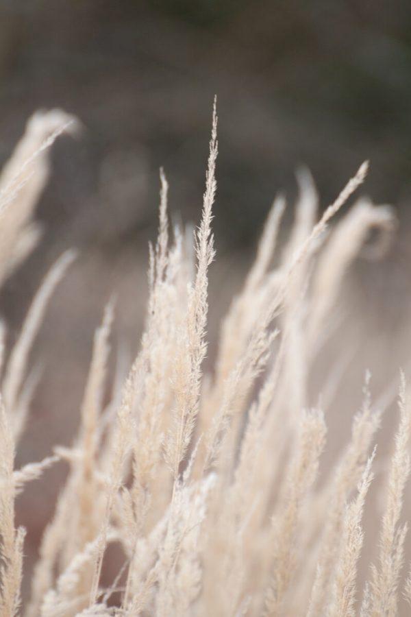 Im Winter fotografieren: Monochrom