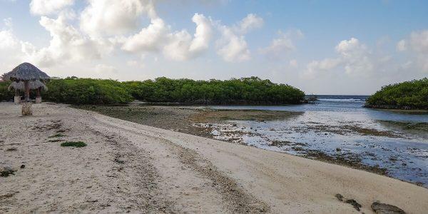 Der Strand Mangel Halto Aruba