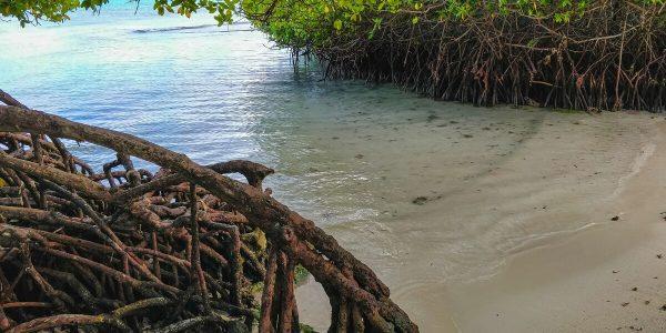 Mangrovenstrand Mangel Halto Aruba