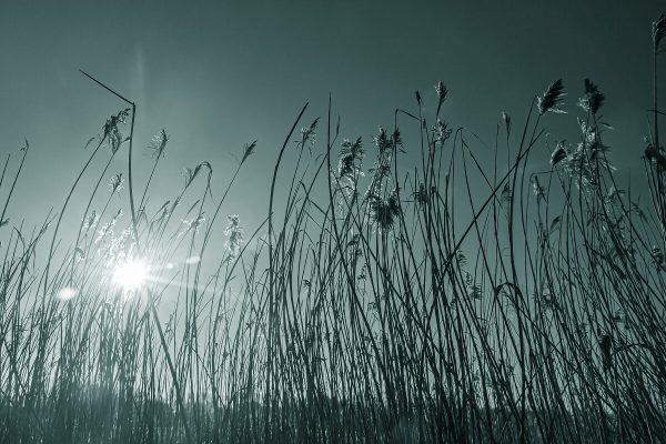 Tipps für's Fotografieren im Winter: Monochrom