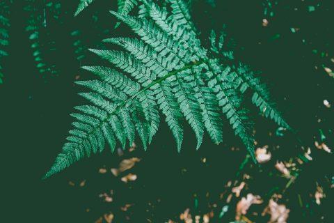 Natur 5