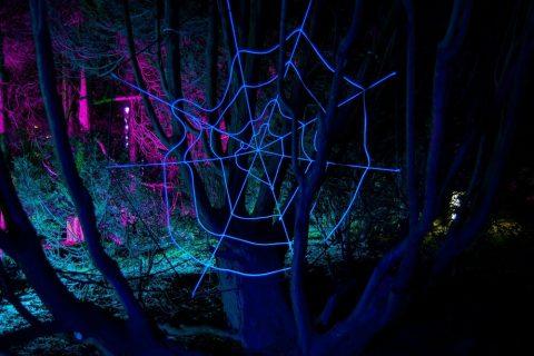 Spinnennetz 2012
